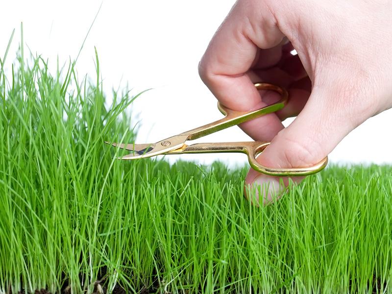 RasenkantenschneidenLustig (1)